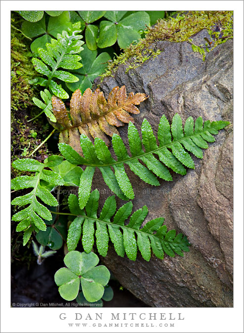 Ferns and Rock