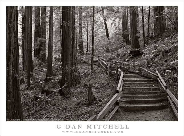 Steps, Ocean View Trail. Muir Woods National Monument. © Copyright G Dan Mitchell.
