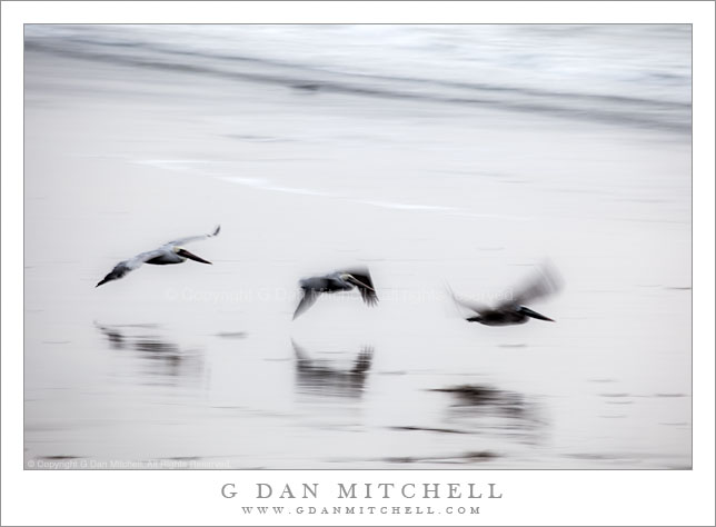 Three Pelicans in Flight, Waddell Beach