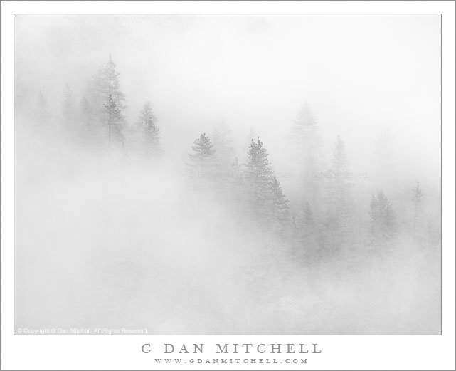 Fog and Trees, Yosemite Valley