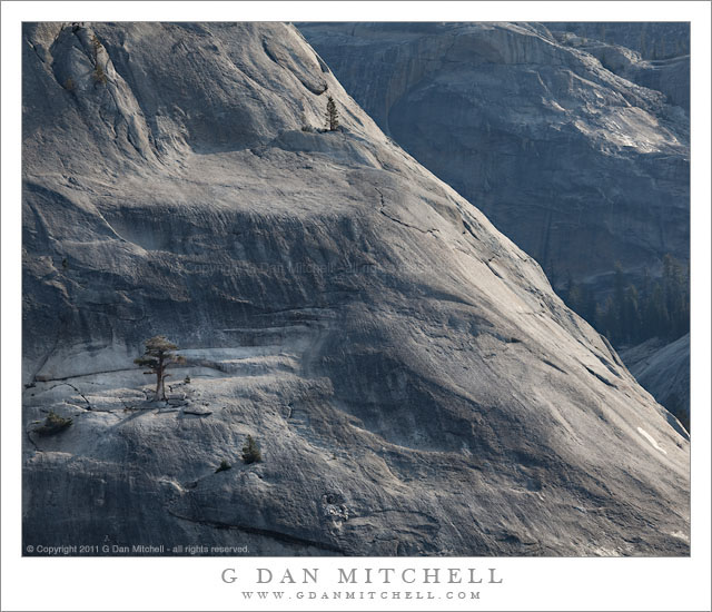 Trees and Granite, Morning - Morning light shines on the trees clinging to massive granite domes in the high country of Yosemite National Park.