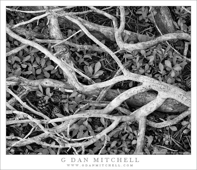Broken Branches - The broken branches of a fallen tree on the ground in the back-country of Yosemite National Park.