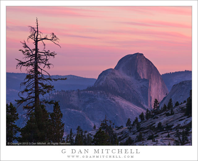 Half Dome, Dusk - Half Dome and lone tree at dusk, from Olmsted Point, Yosemite National Park.