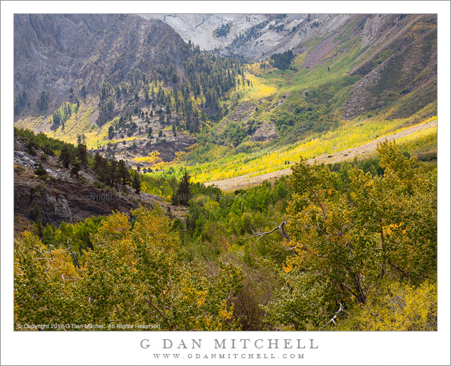 Early Fall Color, McGee Canyon - Early fall color comes to McGee Canyon in the eastern Sierra Nevada, California