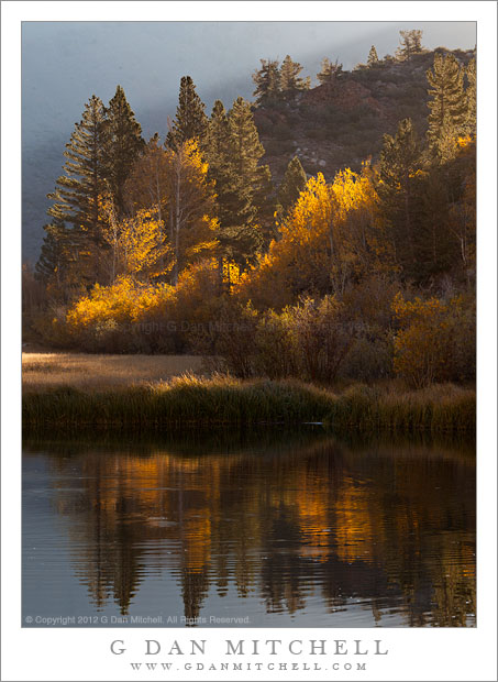 Aspen Trees, Shoreline of North Lake