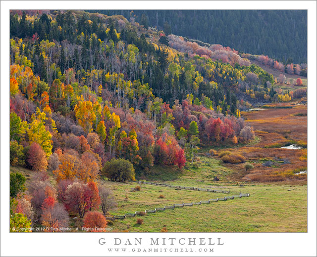 Utah Fall Color, Meadows