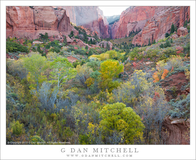 Kolob Canyon, Morning - Morning light slants over the top of sandstone cliffs above early autumn foliage in Kolob Canyon, Zion National Park