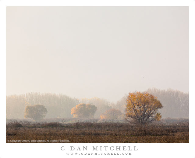 Hazy California Central Valley light on groves of trees as tule fog clears, Merced National Wildlife Refuge