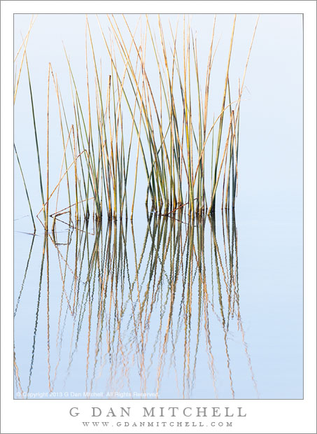 Reeds and Reflected Sky