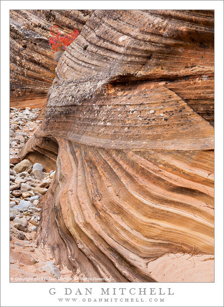 Layered Sandstone and Red Leaves