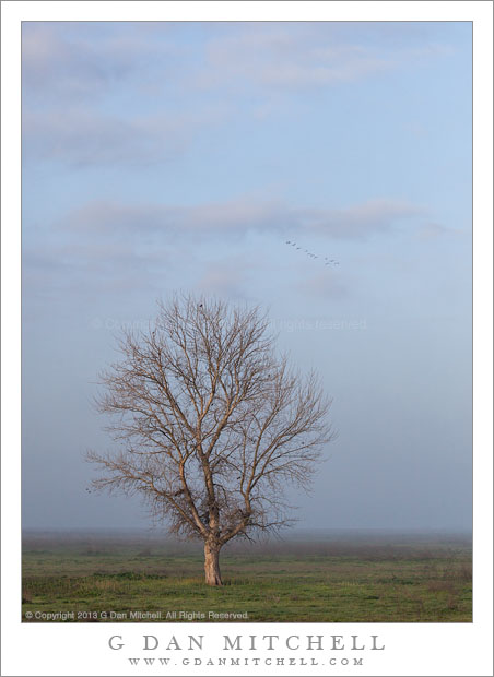 Tree, Fog, Dawn Sky