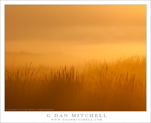 Marsh Grasses and Fog, Dawn