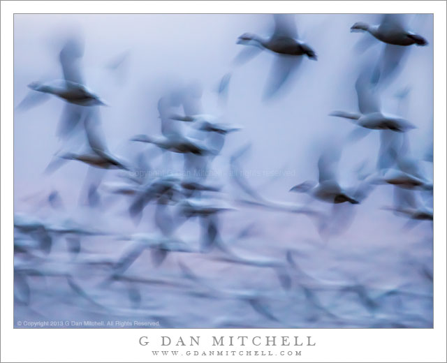 Flight of Geese, Twilight