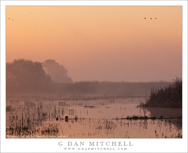 Dawn Sky and Marsh