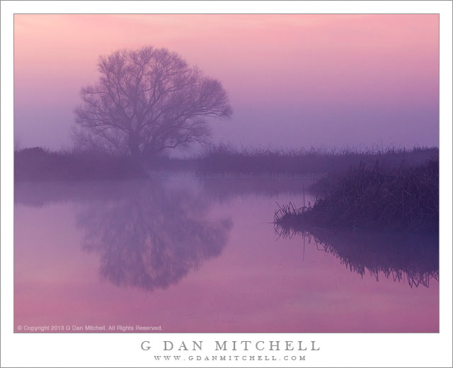 Dawn Light, Fog, Marsh and Tree