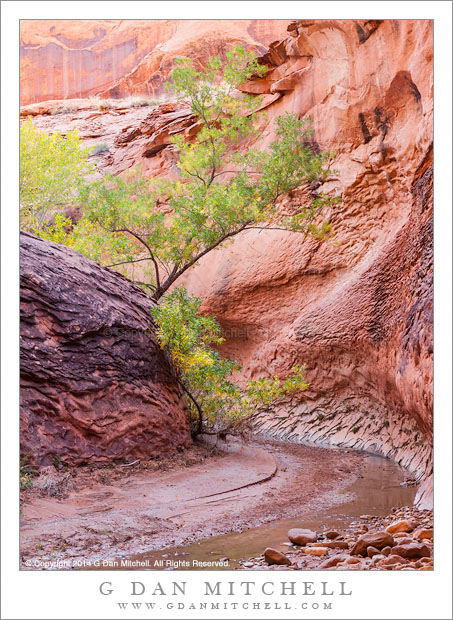 Canyon Bend and Tree