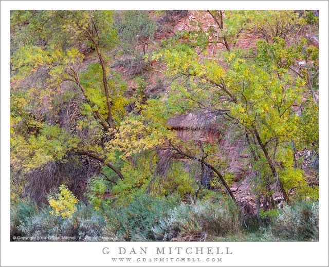 Streamside Foliage, Autumn Color
