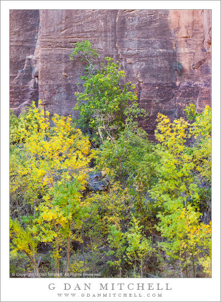 Autumn Color and Sandstone Cliff