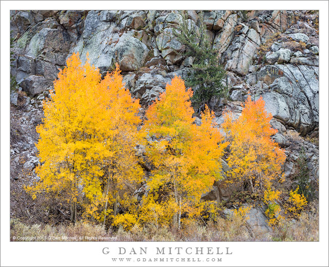 Aspens and Rocky Cliff