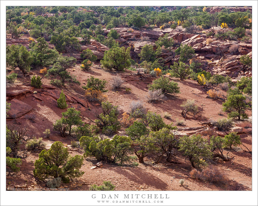 G Dan Mitchell Photograph: Juniper Forest and a Wash — Utah