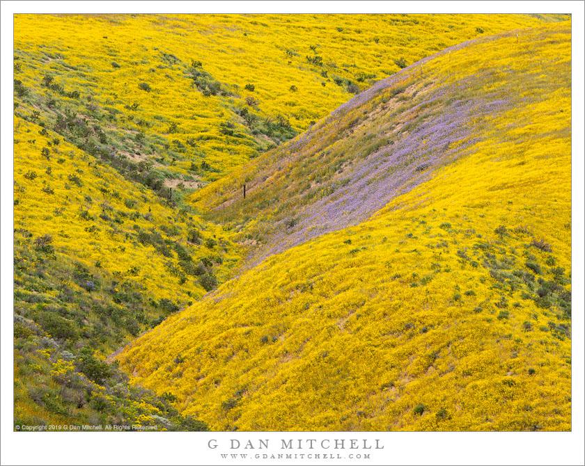 Spring Mountain Landscape Flowers Purple Colored Hills: Yellow; Purple; Flowers; Wildflowers; Spring; Season