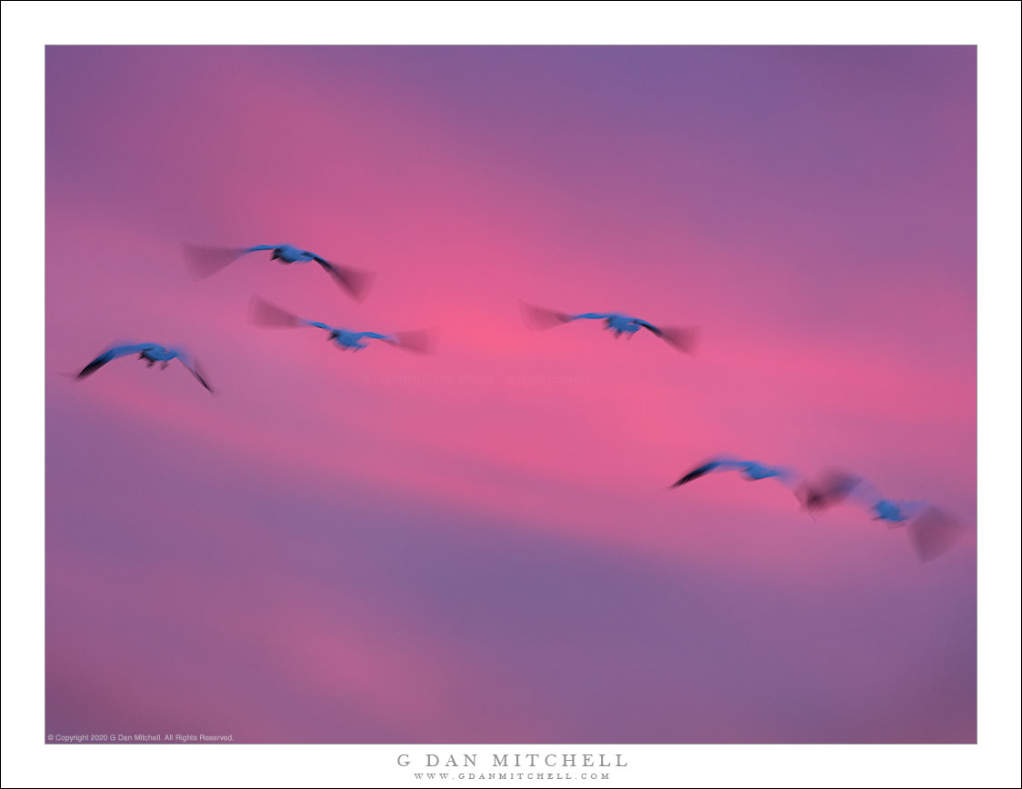 Birds in Winter Dusk Sky