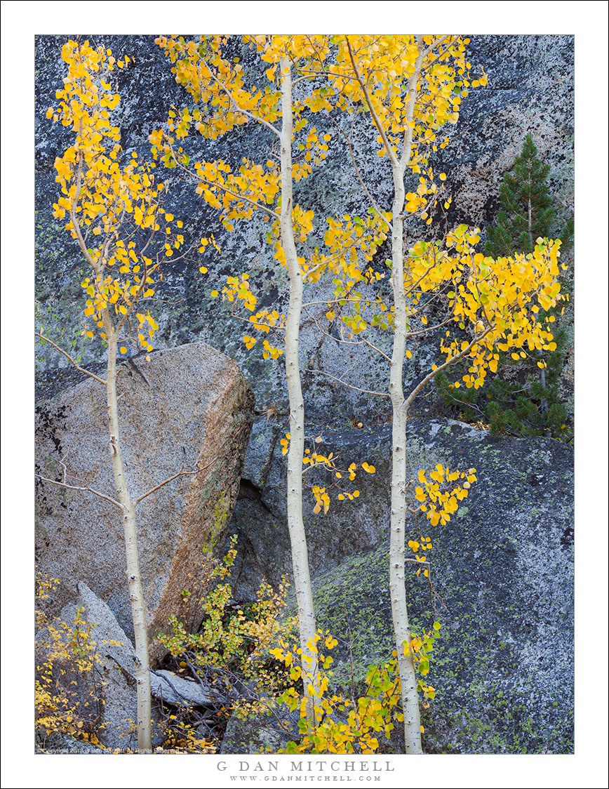 Three Aspens, Granite