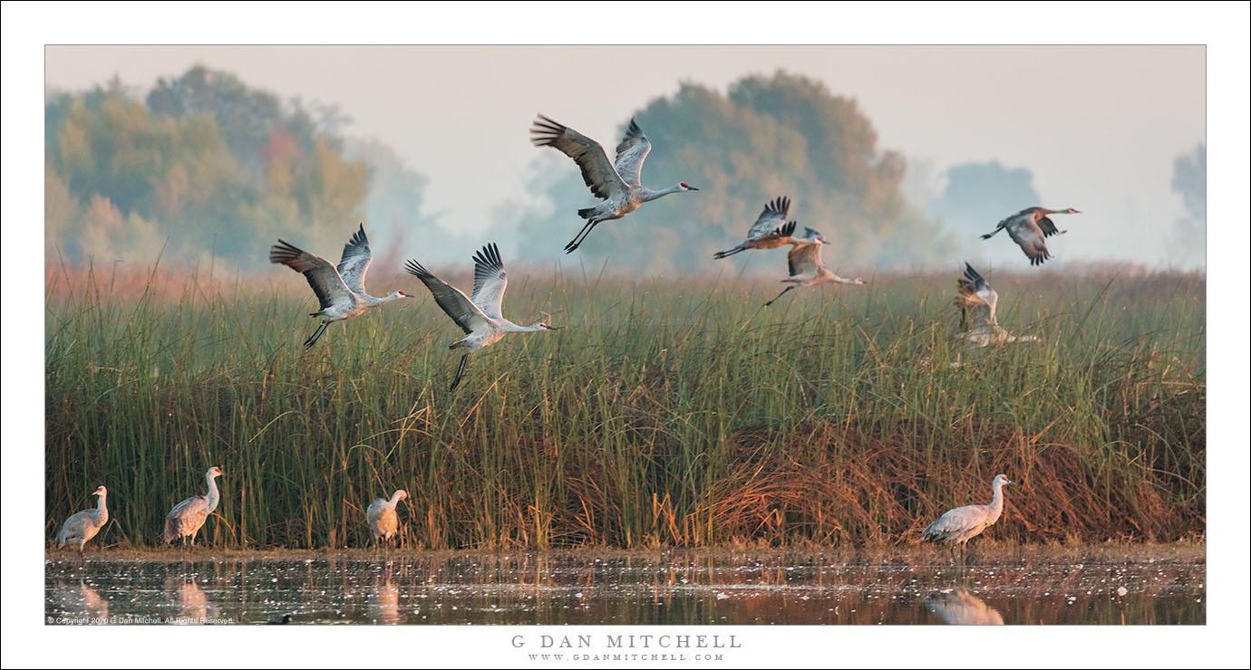 Crane Departure, Morning